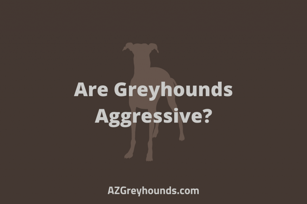 Are Greyhounds Aggressive