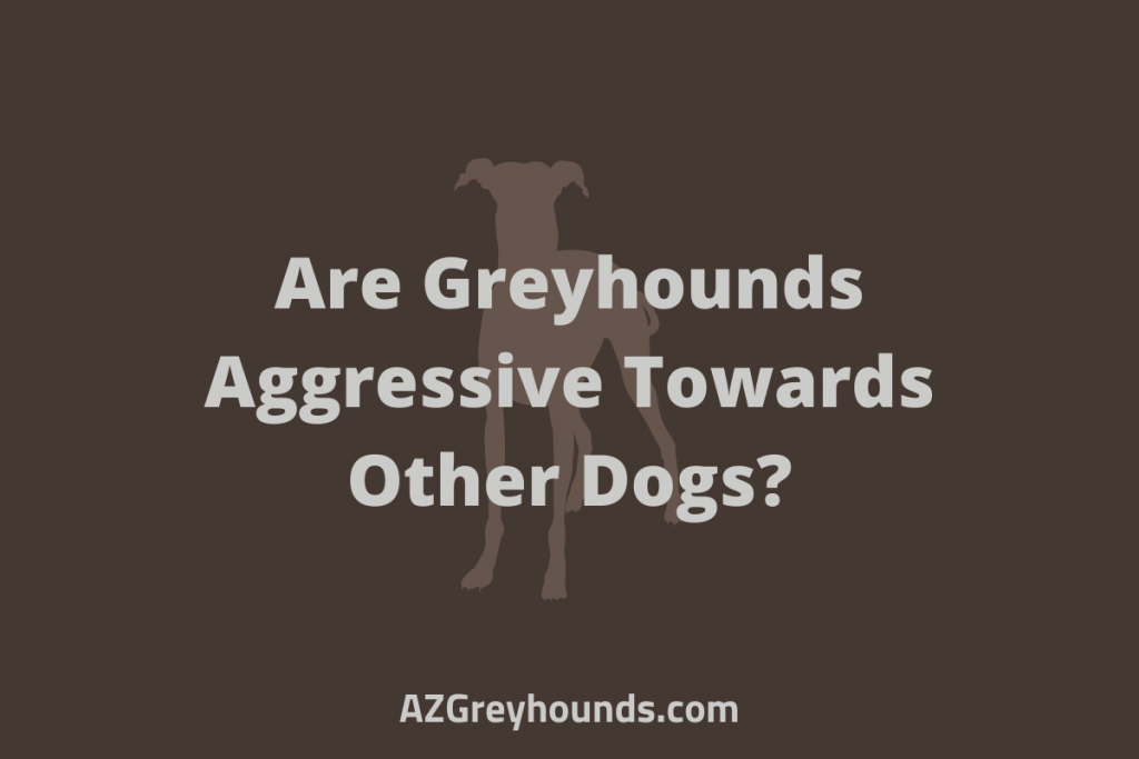 Are Greyhounds Aggressive To Other Dogs
