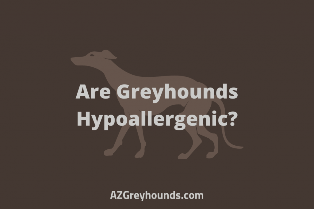 Are Greyhounds Hypoallergenic
