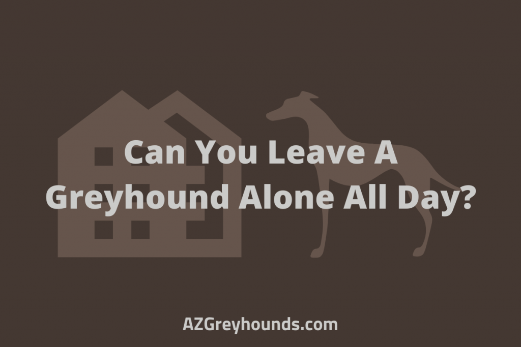 Can You Leave A Greyhound Alone All Day