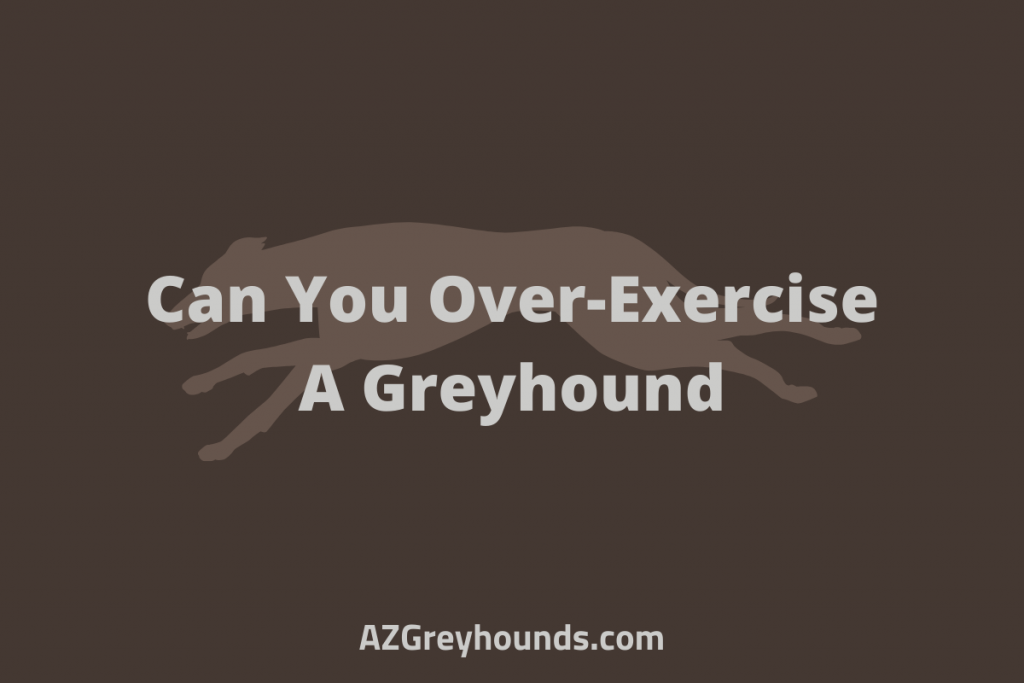 Can You Over-exercise A Greyhound