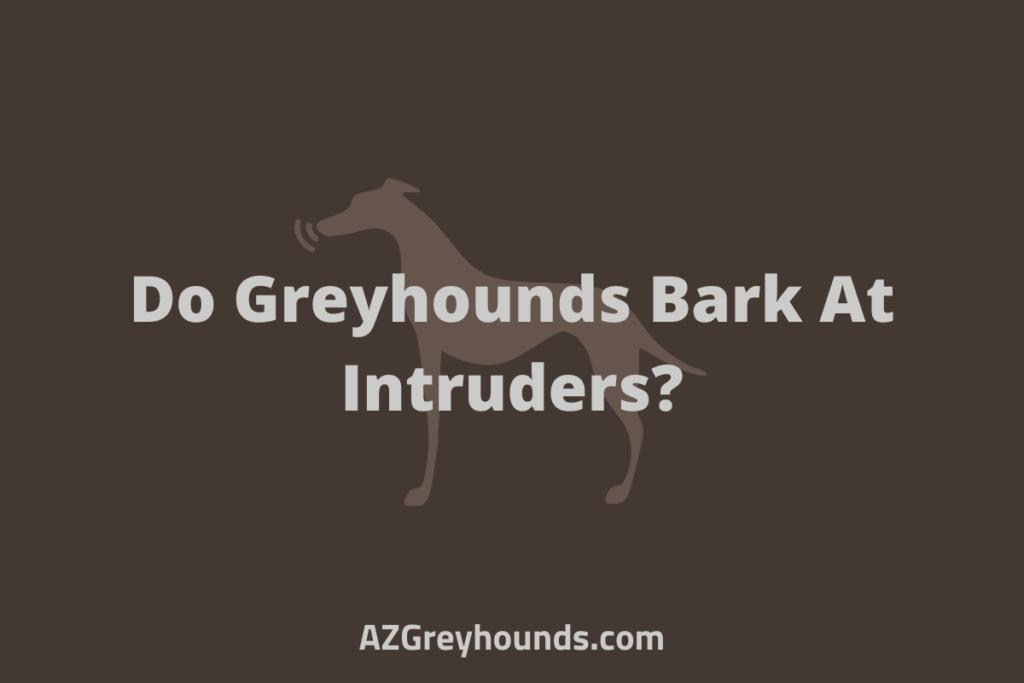 Do Greyhounds Bark At Intruders