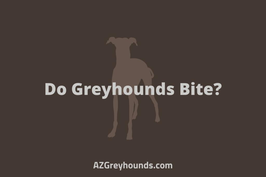Do Greyhounds Bite