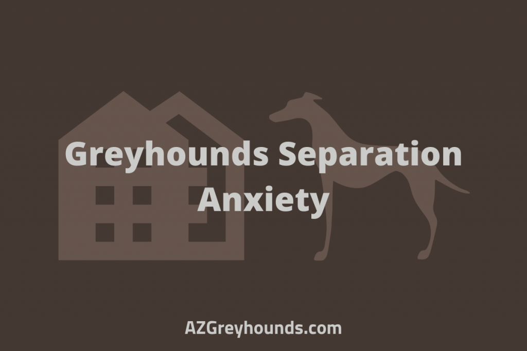 Do Greyhounds Have Separation Anxiety