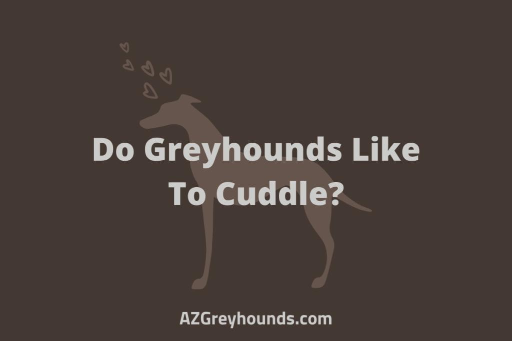 Do Greyhounds Like To Cuddle