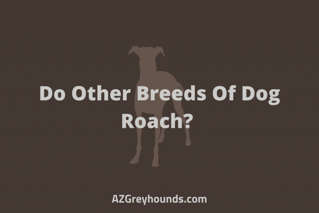 Do Other Breeds Of Dog Roach_