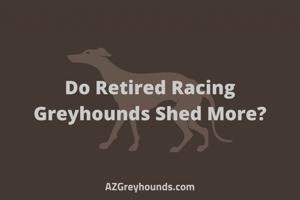 Do Retired Racing Greyhounds Shed More