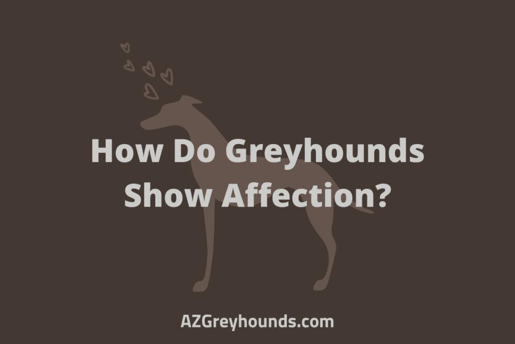 How Do Greyhounds Show Affection