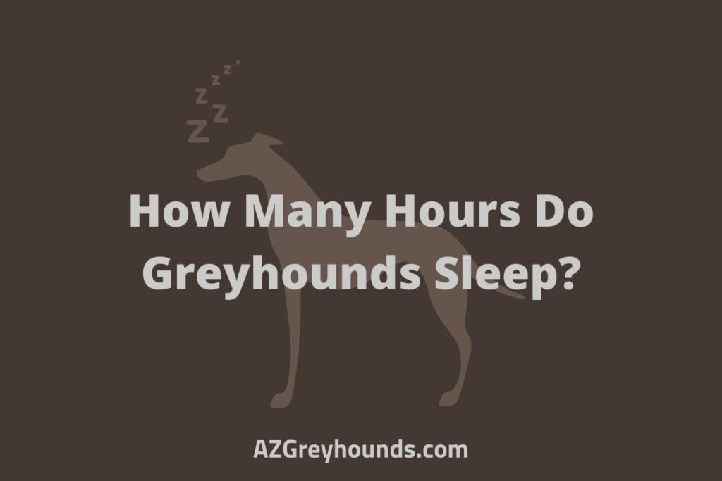 How Many Hours Do Greyhounds Sleep
