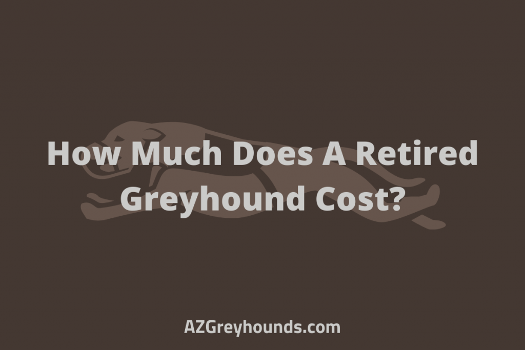 How Much Does A Retired Greyhound Cost