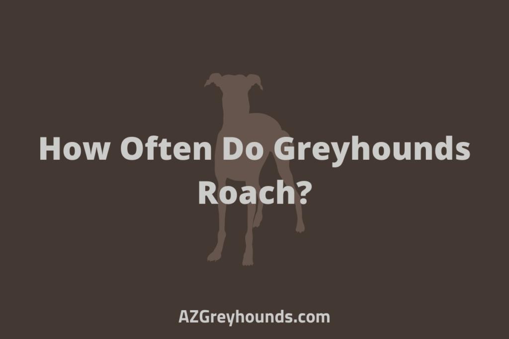 How Often Do Greyhounds Roach_