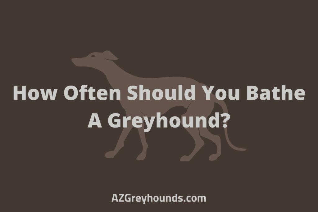 How Often Should You Bathe A Greyhound