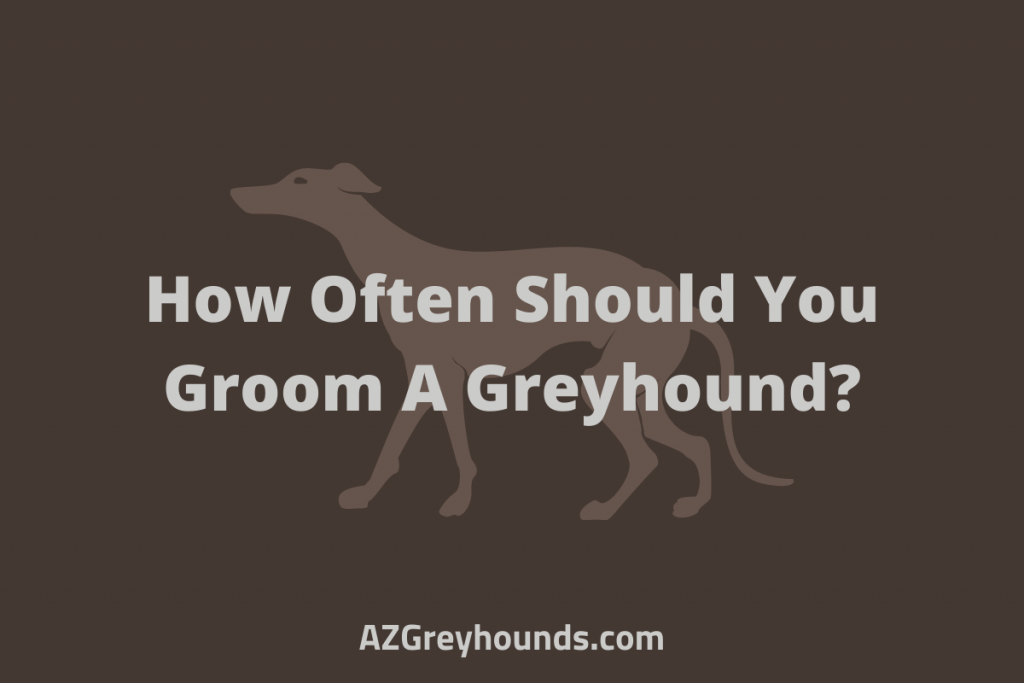 How Often Should You Groom A Greyhound
