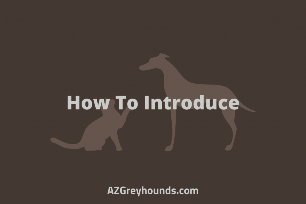 How To Introduce