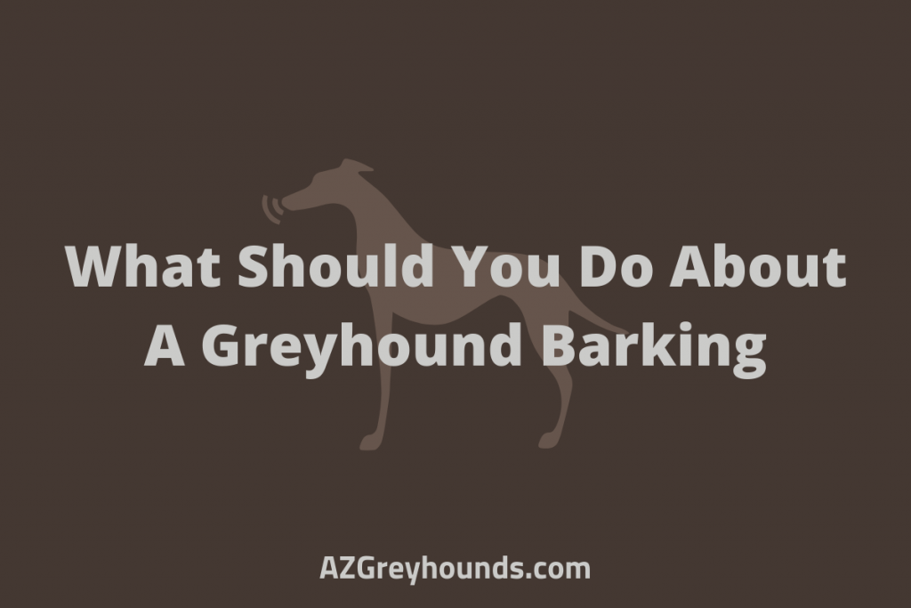 How do I stop my Greyhound from barking