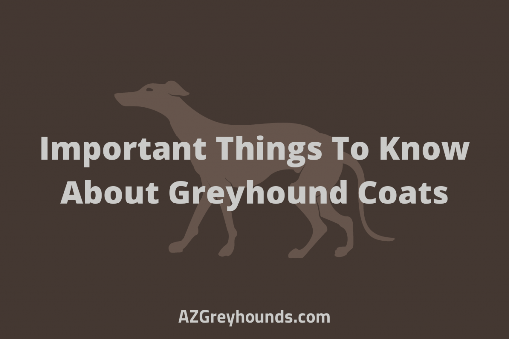 Important Things To Know About Greyhound Coats