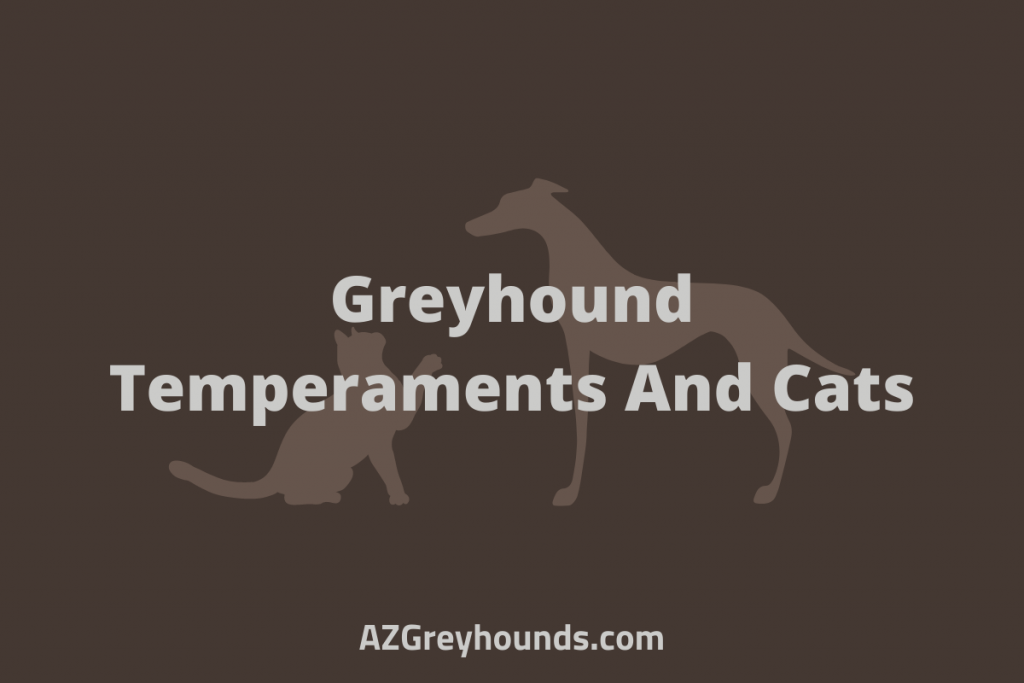 Italian greyhounds and cats