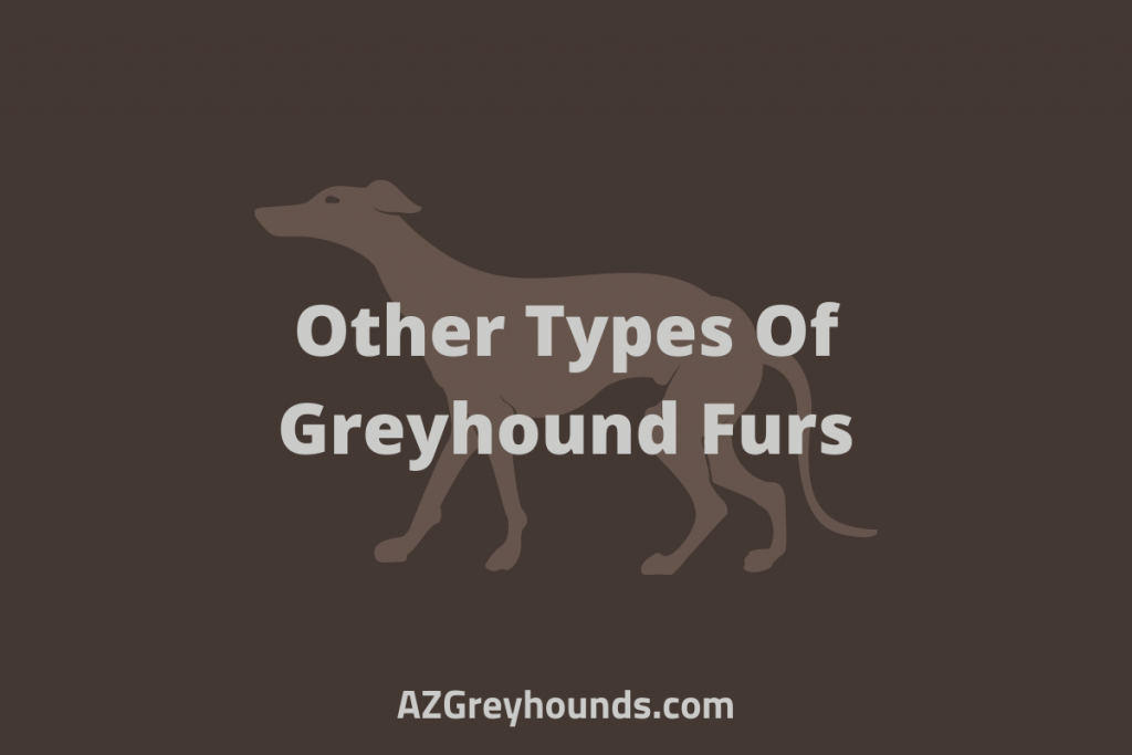 Other Types Of Greyhound Furs