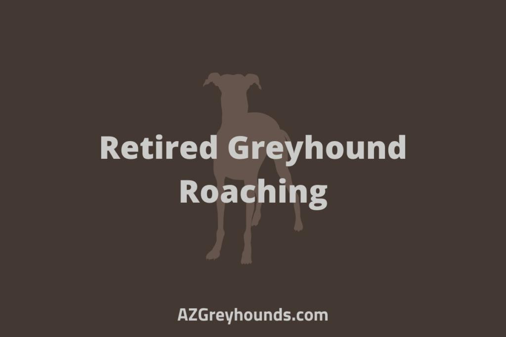 Retired Greyhound Roaching