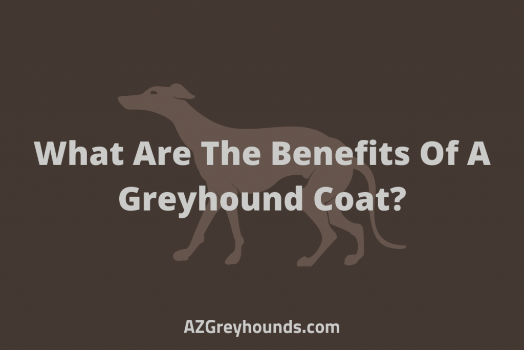 What Are The Benefits Of A Greyhound Coat