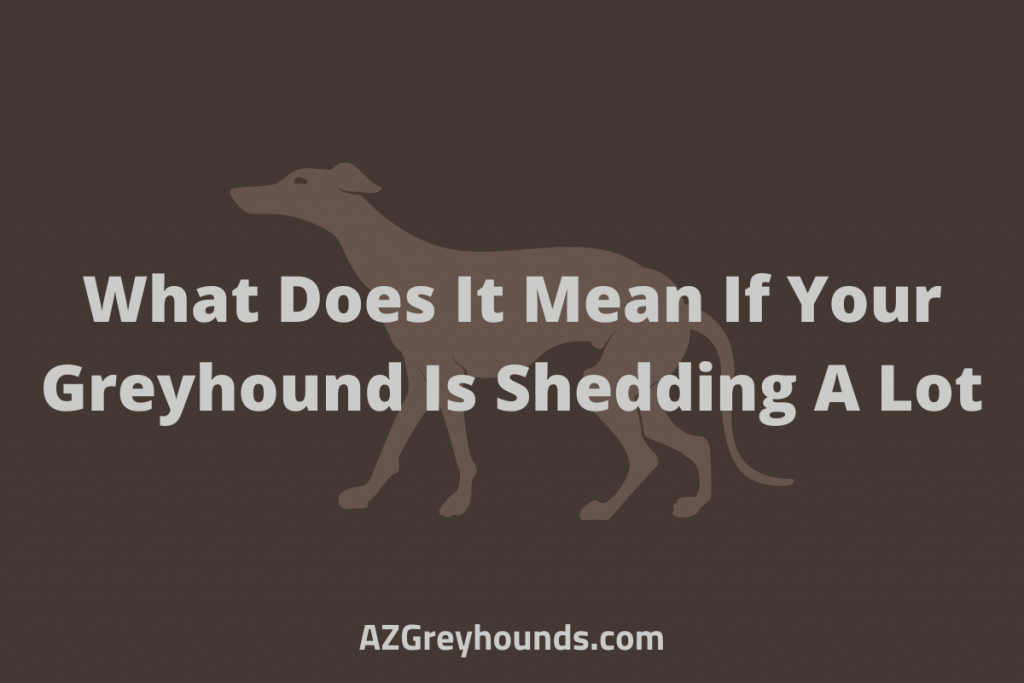 What Does It Mean If Your Greyhound Is Shedding A Lot