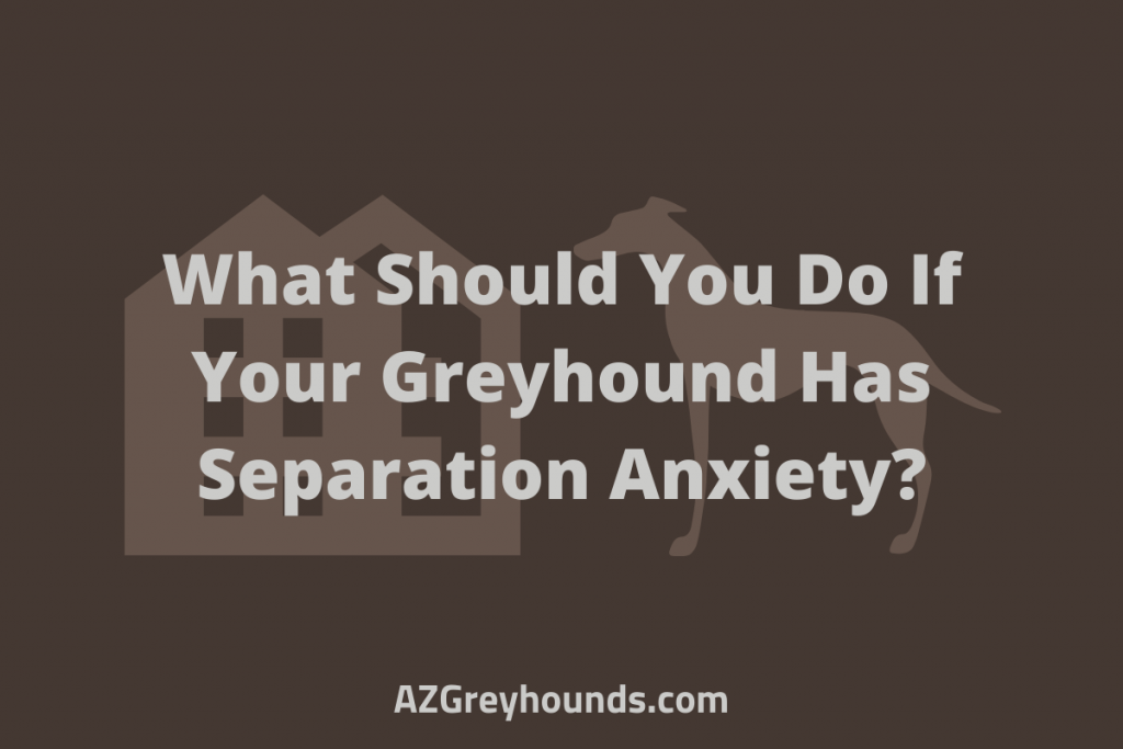 What Should You Do If Your Greyhound Has Separation Anxiety