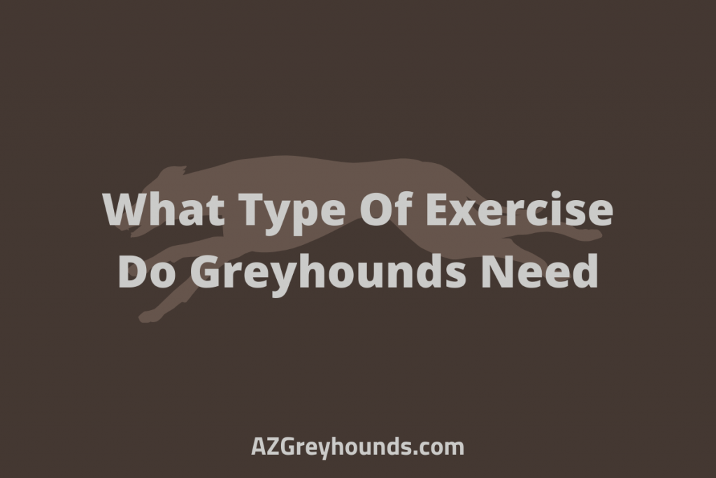 What Type Of Exercise Do Greyhounds Need