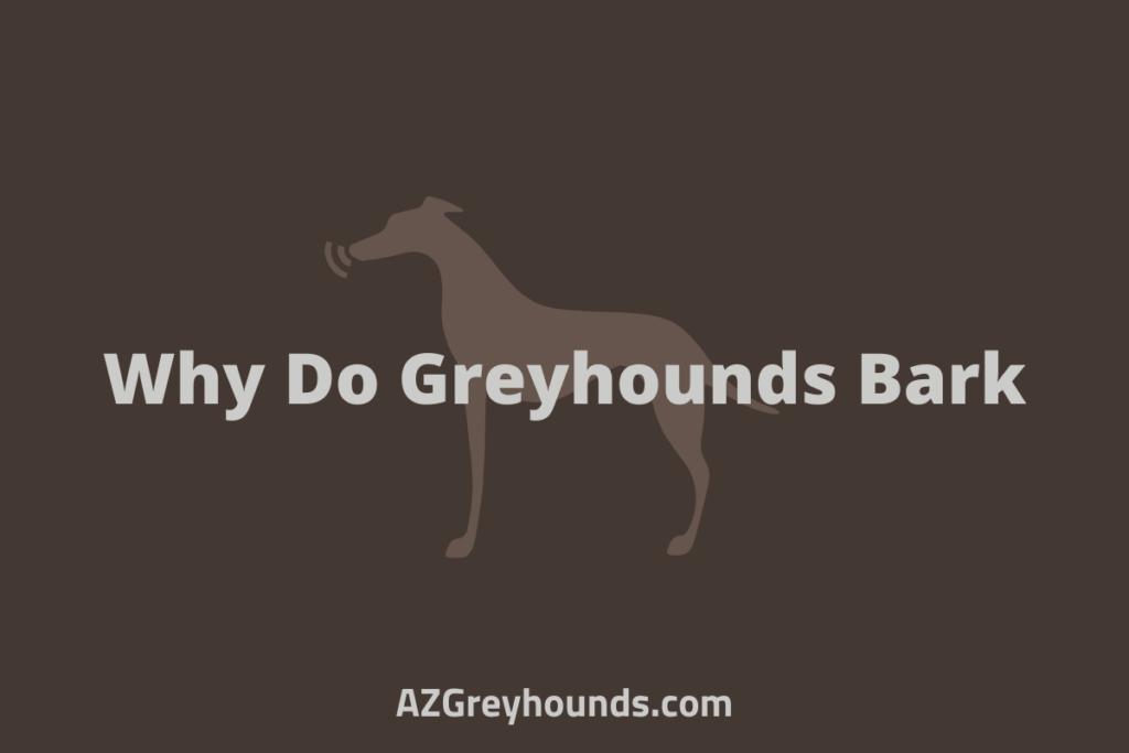 Why Do Greyhounds Bark