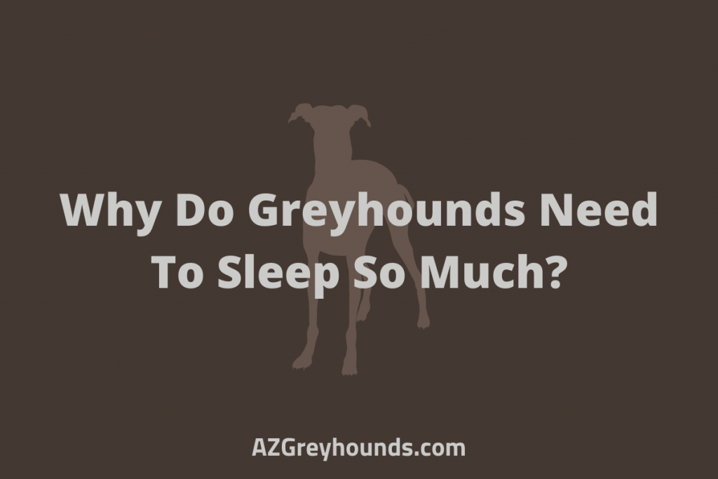 Why Do Greyhounds Need To Sleep So Much_