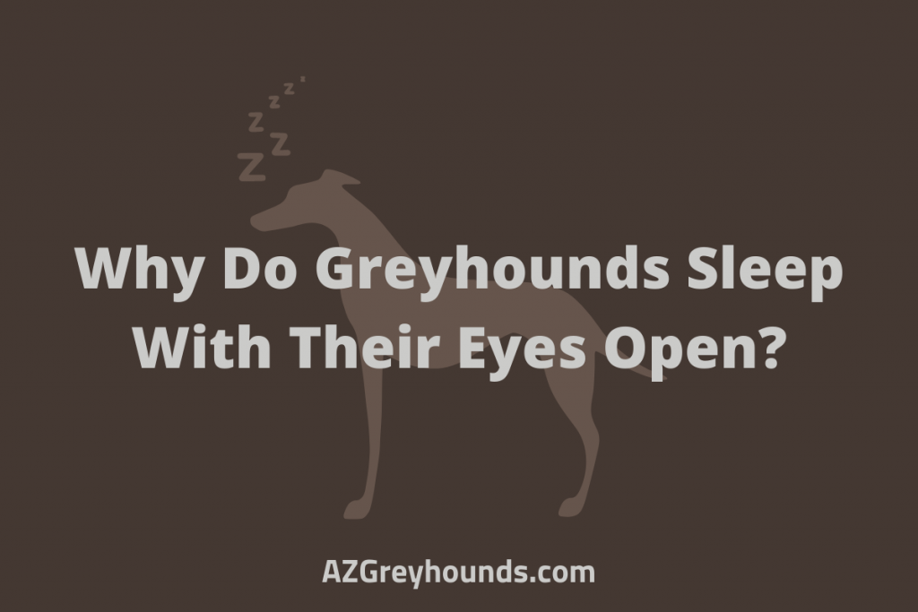 Why Do Greyhounds Sleep With Their Eyes Open