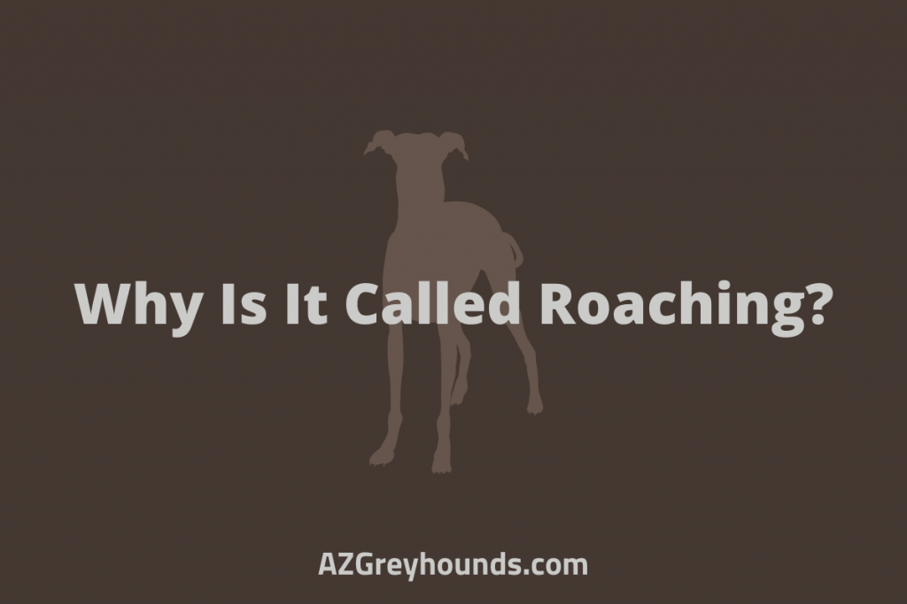 Why Is It Called Roaching_