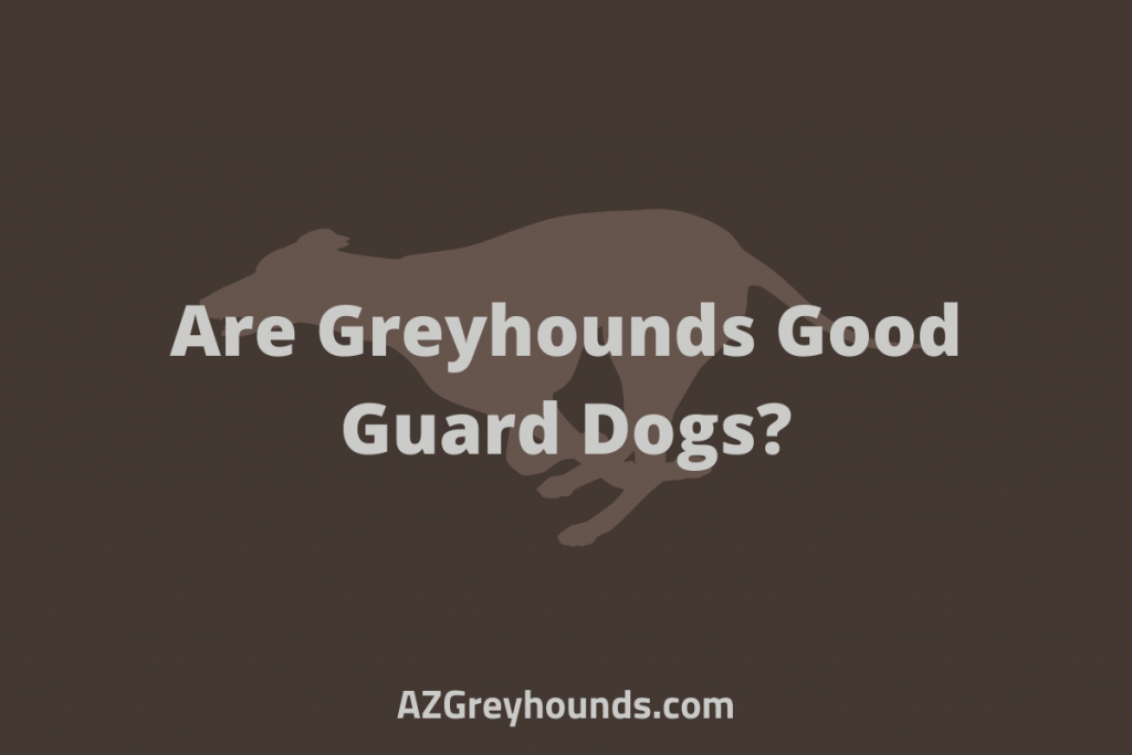 are greyhounds good guard dogs
