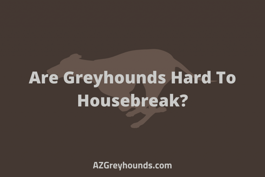 are greyhounds hard to housebreak