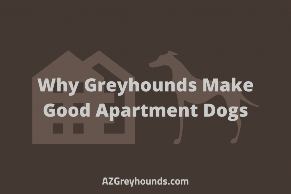 do greyhounds do well in apartments or not