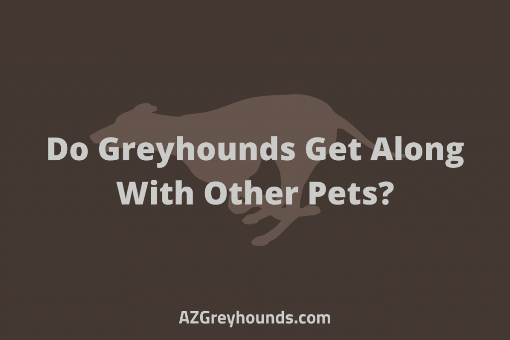 do greyhounds get along with other dogs