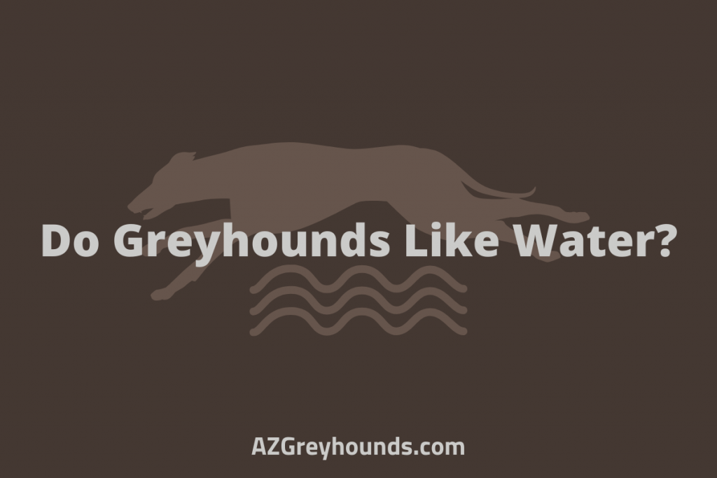 do greyhounds like water