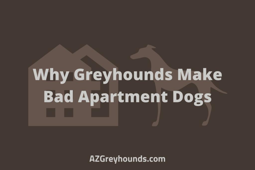 do greyhounds make good apartment dogs