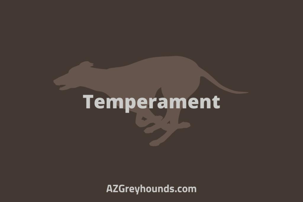 do greyhounds make good pets