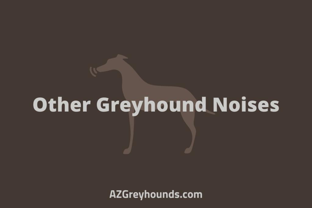 greyhound noises