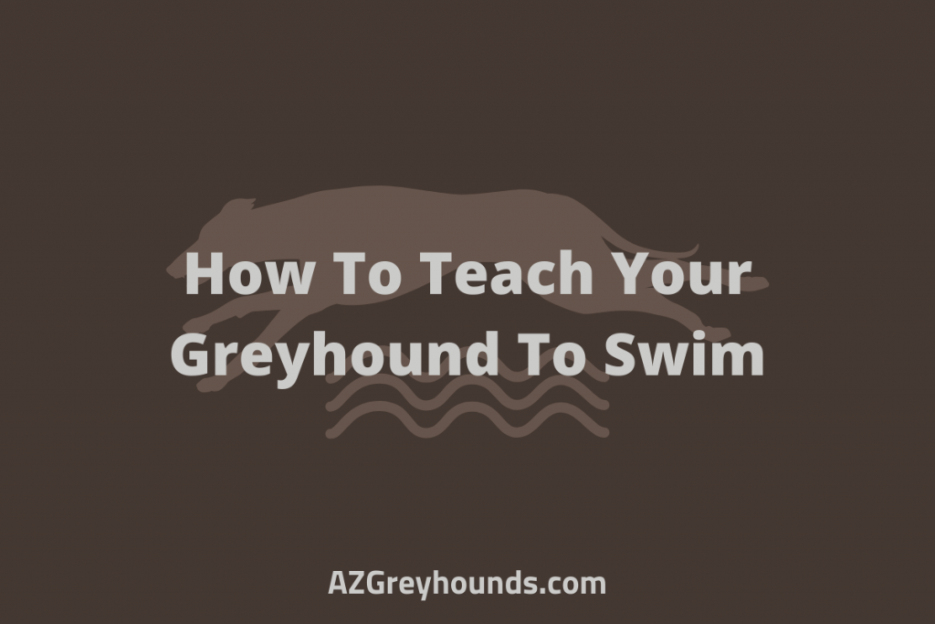 greyhounds and swimming pools