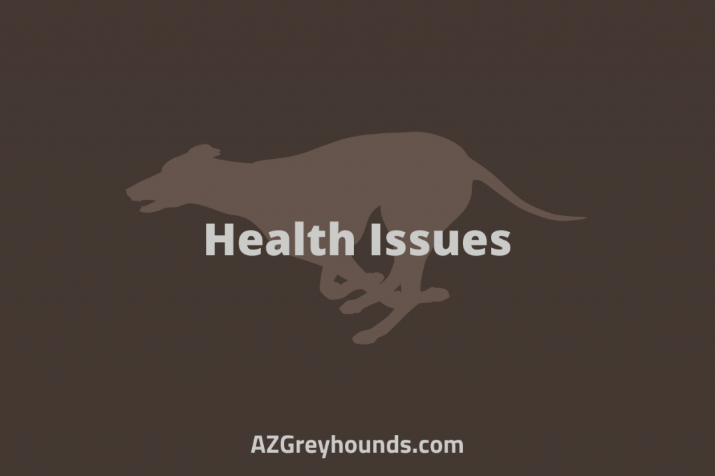 greyhounds as pets pros and cons