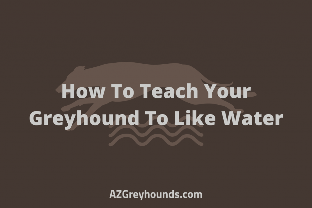 greyhounds like water