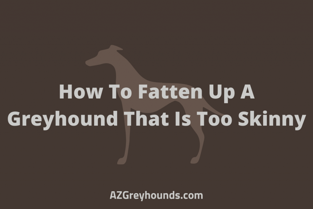 how to fatten up a greyhound