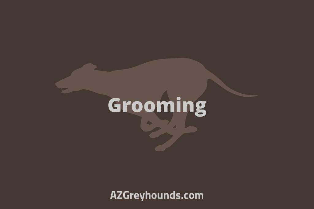 is a greyhound a good first dog