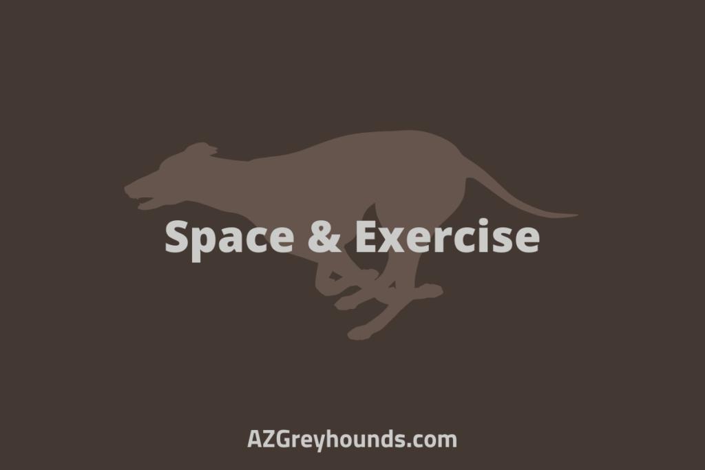 is a greyhound a good pet