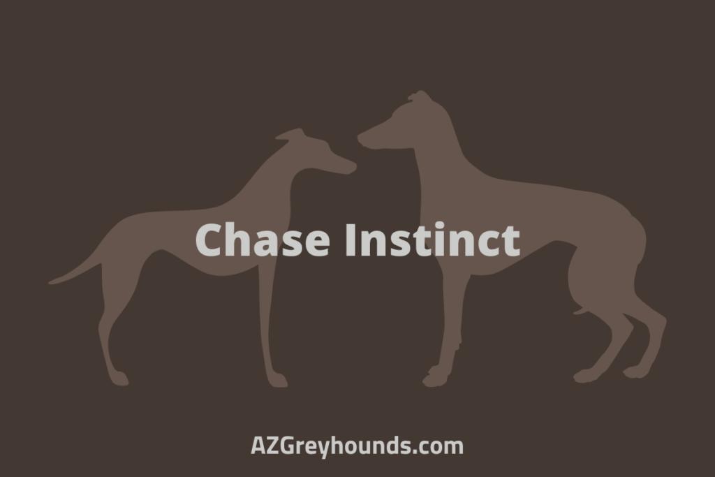 italian greyhounds vs whippets