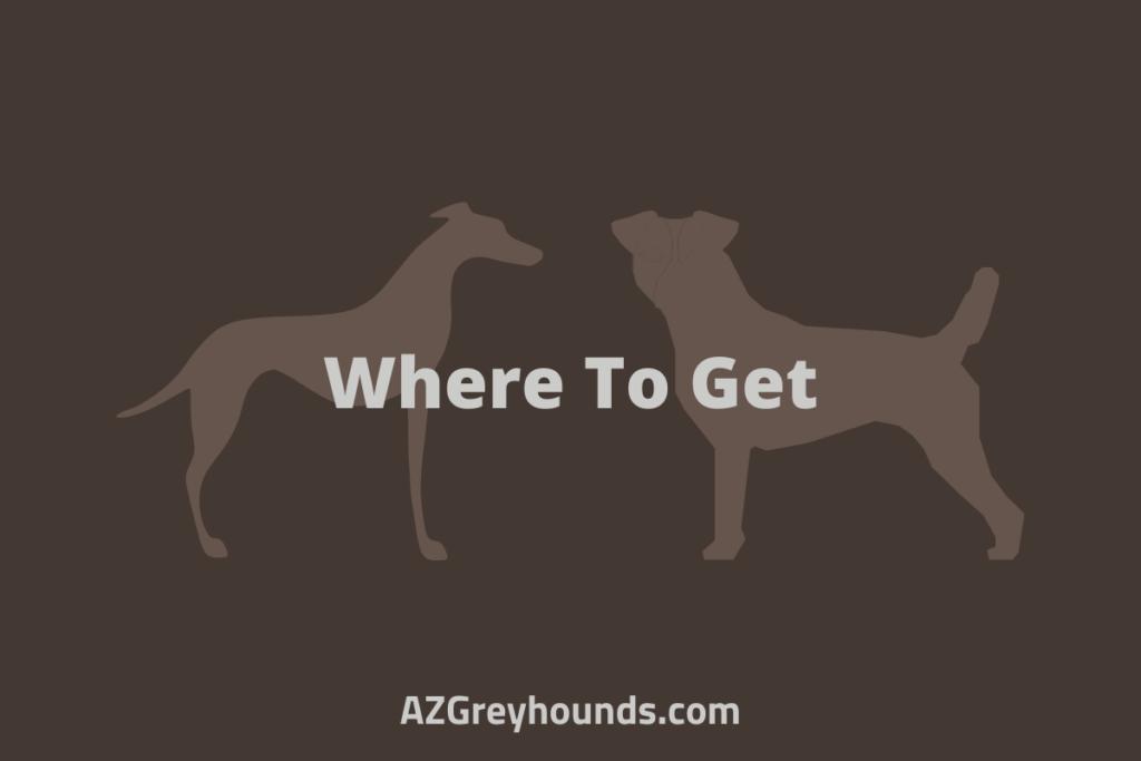 jack russell italian greyhound cross