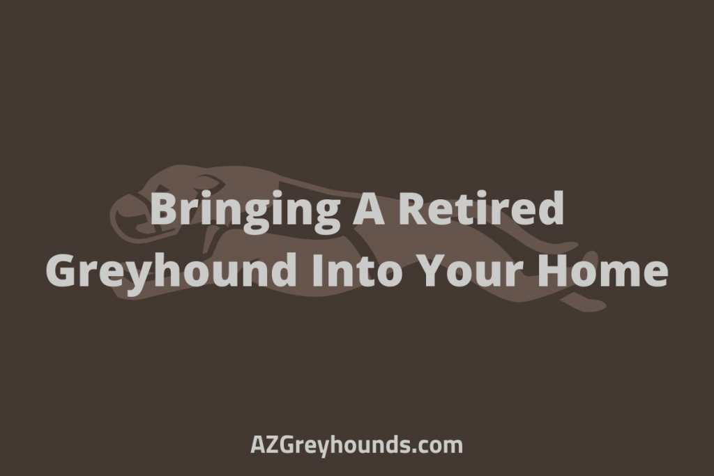 owning a retired greyhound