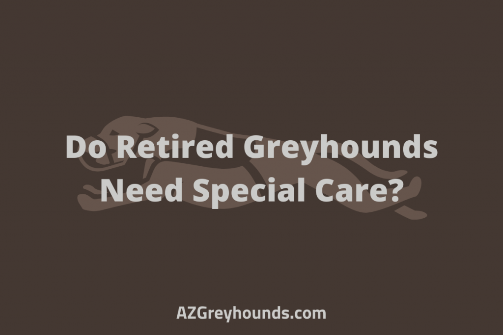 what to feed a greyhound retired
