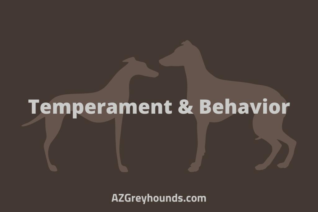 whippet vs greyhound size